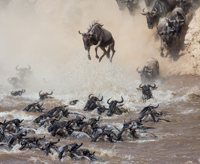 Masai-mara-migration-flying-package