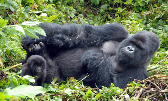 Rwanda Wildlife and Culture 8days