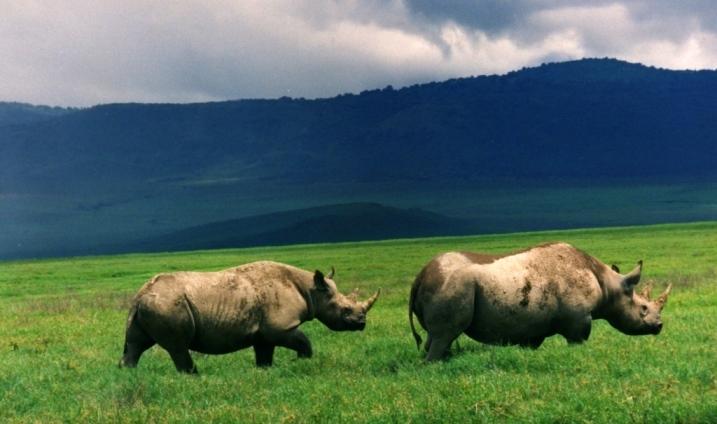 African Paradise Safaris - Africa tours holiday Kenya safari