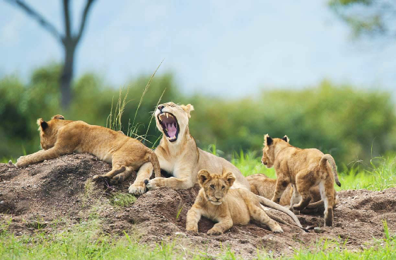 Kenya and Tanzania_Migration_wildlife_safari_11days
