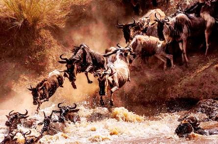 African Paradise Safaris - Masai mara Great migration 4 days