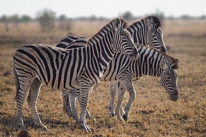 4 Days - Masai Mara and Lake Nakuru Tour