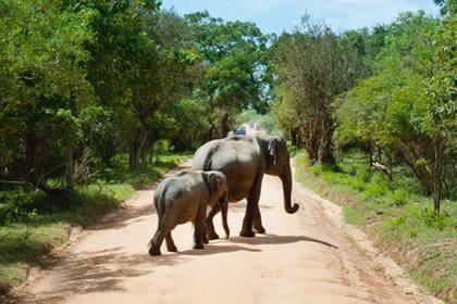 Kenya migration safaris 3 days