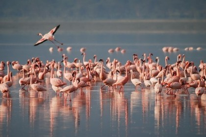 Lake Naivasha Gateways 2 days