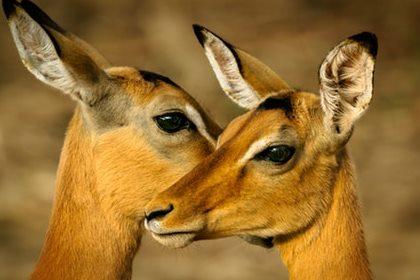 Samburu wildlife tour 3 days