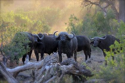 Tanzania Migration Safari 5 days